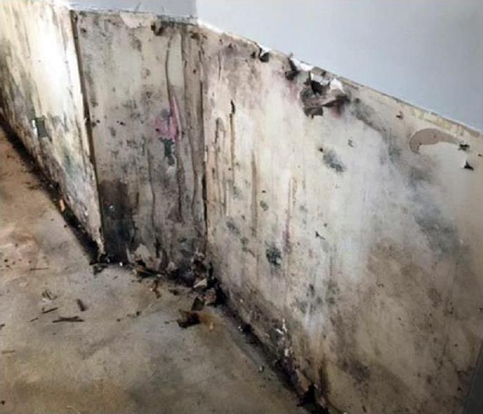 Mold Damage In Green Valley Before