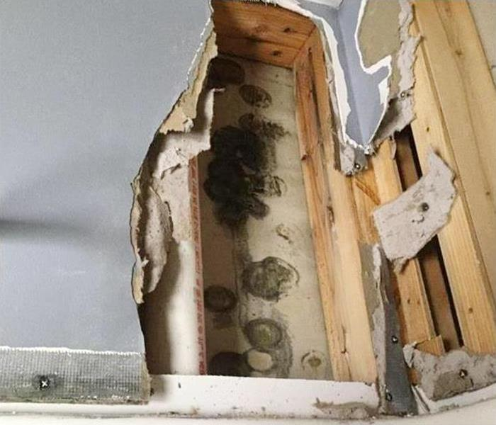 Mold Remediation In Vail