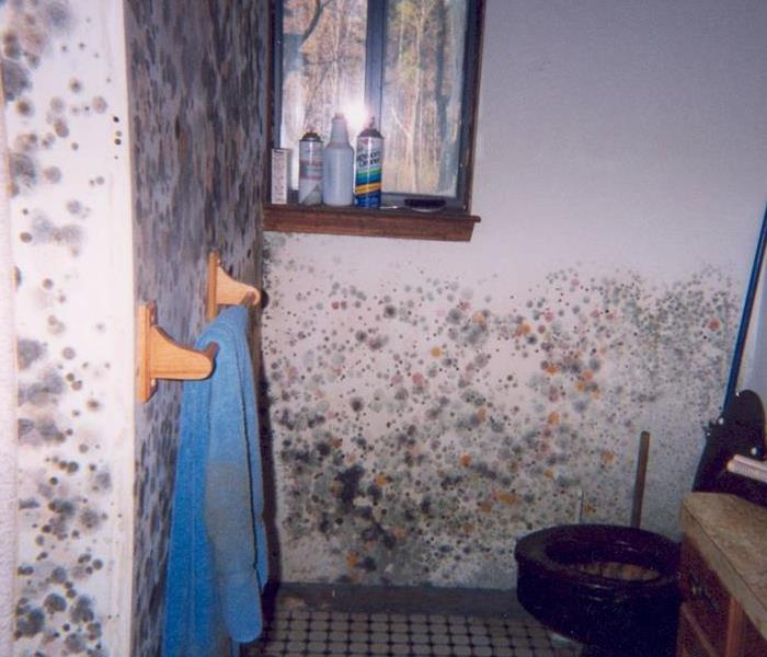 Mold Remediation What Is Mold? (Do I Need A Mold Inspection?)