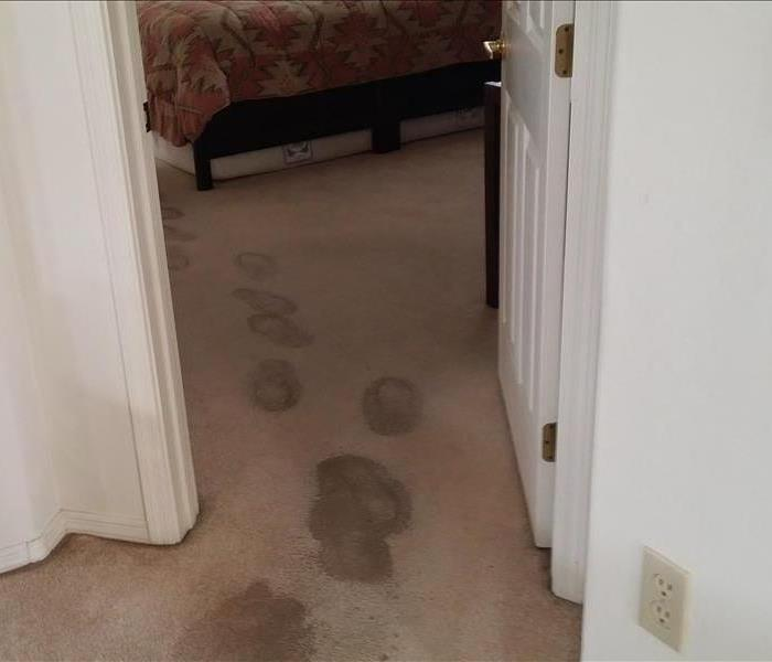 Water Damage Carpet Drying Services Tucson