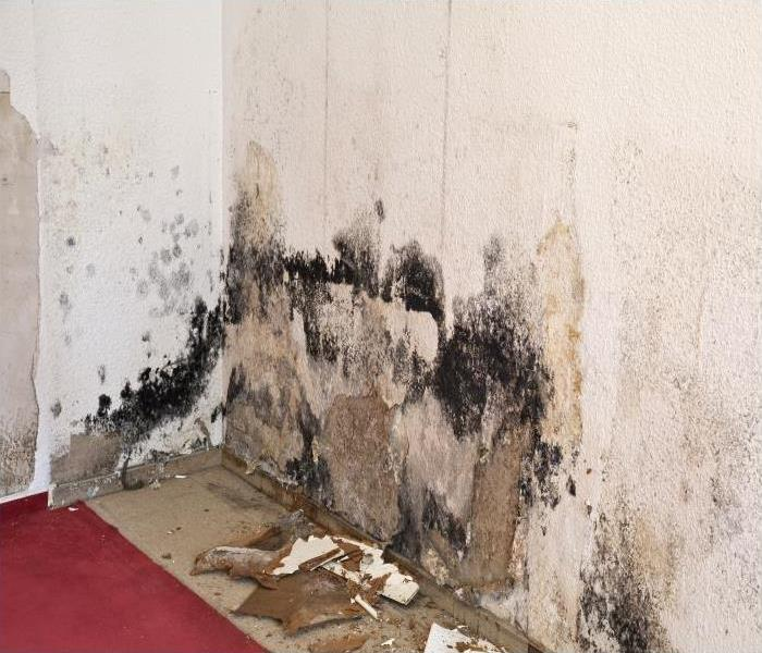 Mold Remediation Common Reasons For Mold Damage In Green Valley Residences