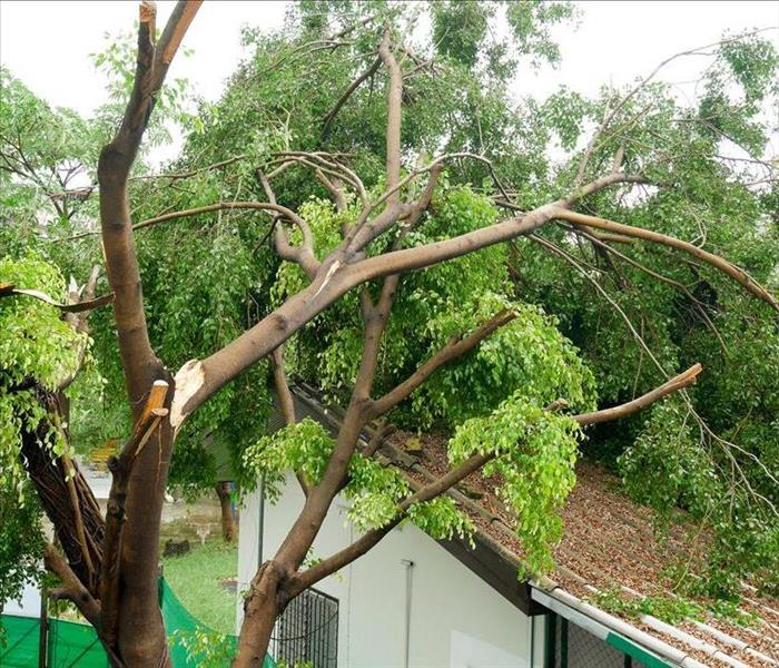 Why SERVPRO SERVPRO Will Restore Your Green Valley Home When Bad Weather Hits